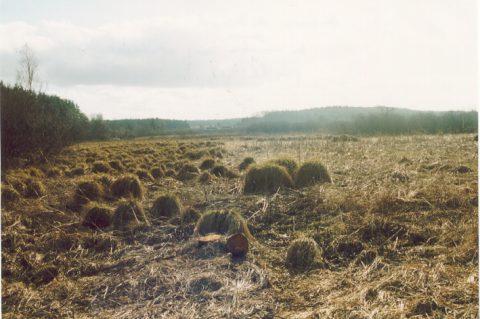 Marais de Heinsch